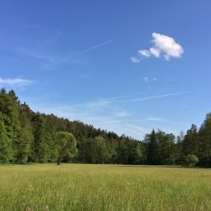 2015-05-29_Ilz_Behringer Stefan