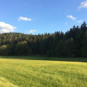 2015-05-10_Ilz_Behringer Stefan
